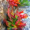 Some plant life