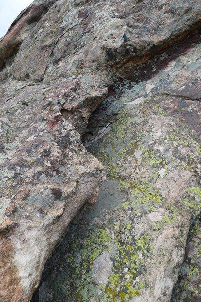 Much lichen.