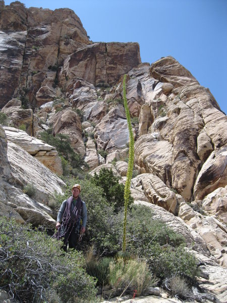 Rock Climbing Photo: Andrew and the Giant Agave.  Heading up to the bas...