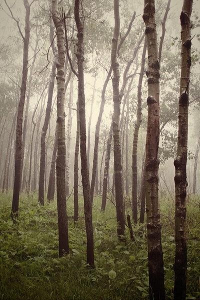 Forest Spring 2012