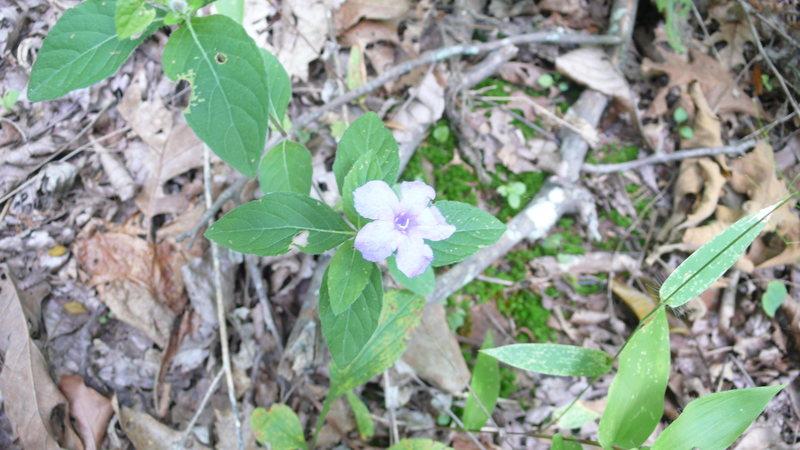 purple flower...?