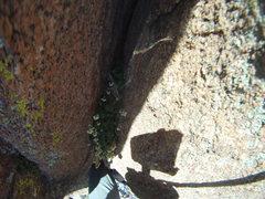Rock Climbing Photo: My little friend.