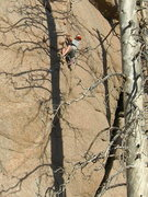 Rock Climbing Photo: Is he climbing rock or is he climbing trees? Kevin...