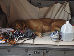 Jack, super tired after a long day in southern utah.