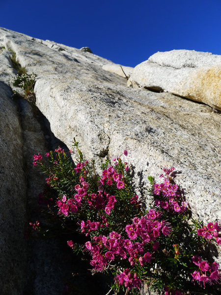 Rock Climbing Photo: slab flora