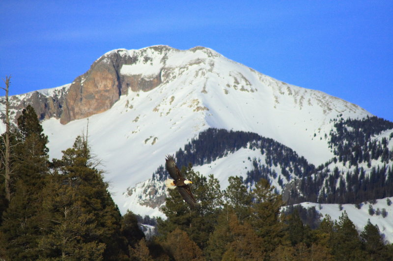 Rock Climbing Photo: Eagle & Pagosa peak.