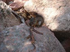 Rock Climbing Photo: Recycling.  First Flat Iron, Boulder.