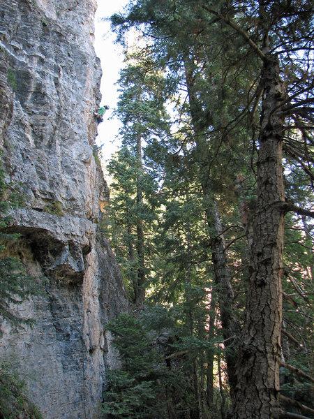 Rock Climbing Photo: Jon Scoville eyeing the crux.