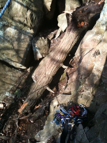 The trunk of the ex-tree.