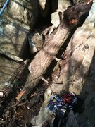 Rock Climbing Photo: The trunk of the ex-tree.