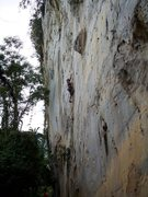 Rock Climbing Photo: eric coffman leading Vina Kulafu #12