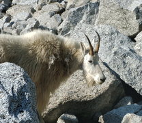 Rock Climbing Photo: Mr. Billy