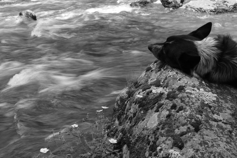 Ringo at Riverside Boulder.