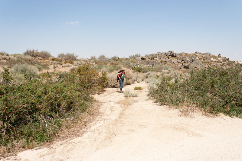 Rock Climbing Photo: Trailhead from Coxey Truck road