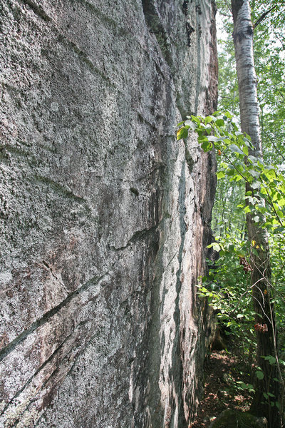 Rock Climbing Photo: A face that needs to be cleaned but is 20+ feet ta...