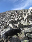 Rock Climbing Photo: My little climbing pooch! Prior to her paws gettin...