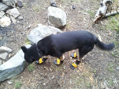 Lucy in her booties! Should have made her wear these up the mountain.