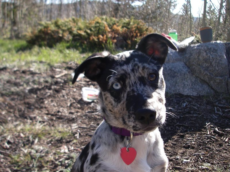 Rock Climbing Photo: My dog!