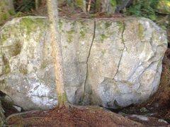 Rock Climbing Photo: Chocolate (middle)
