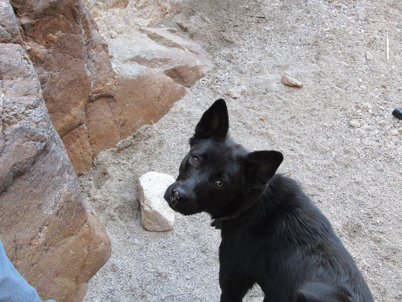 Rock Climbing Photo: New addition to the family checking out the landin...