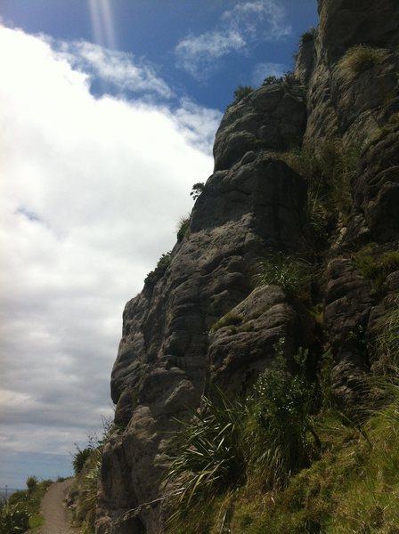 Warratah Wall Left