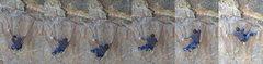 Rock Climbing Photo: hell yeah!