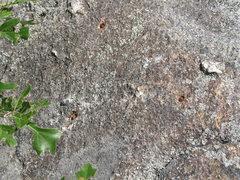 """Rock Climbing Photo: Chopped """"Anchors"""""""