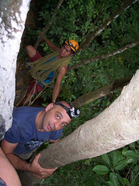 Rock Climbing Photo: ascending the tree