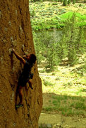 Rock Climbing Photo: latin lover 12a
