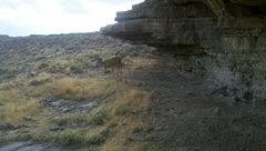 Rock Climbing Photo: Even deer like to boulder