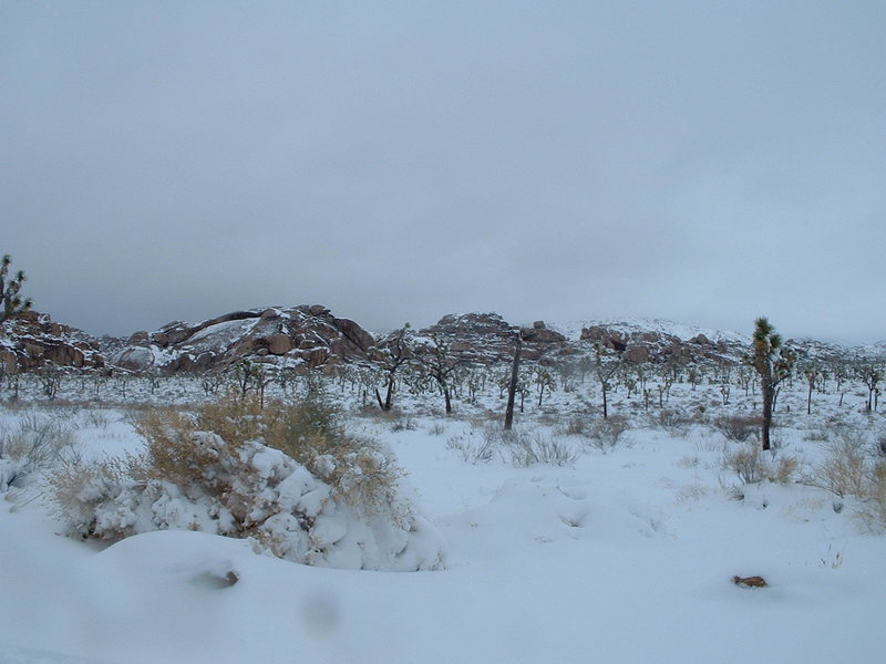 Rock Climbing Photo: J Tree after blizzard