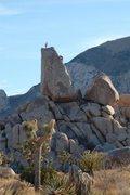 Rock Climbing Photo: J Tree