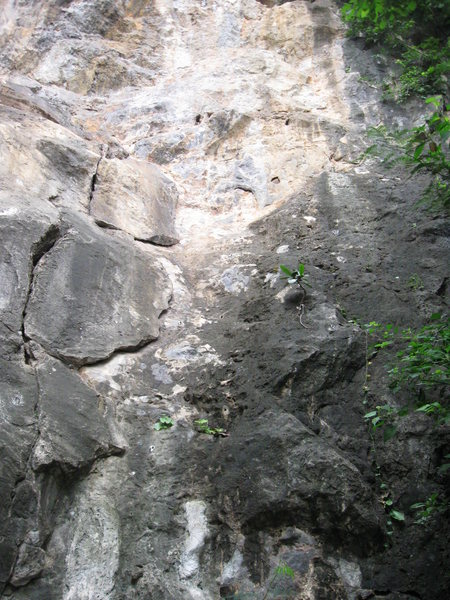 Right side of the lefthand climbing wall at Gecko Wall Right.<br> <br> L-R:<br> Obvious crack shown in other photo.<br> Bolts to right of crack to anchor.