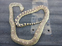Rock Climbing Photo: Snake