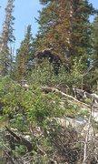 Rock Climbing Photo: Moose at the anchors.