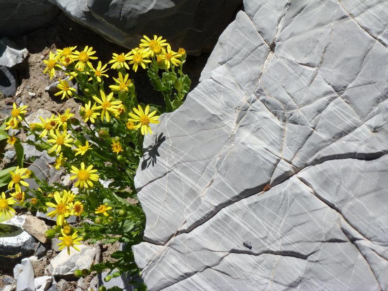 Rock Climbing Photo: Albion Dolomite