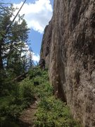 Rock Climbing Photo: No more tree covering the route.  It's now coverin...