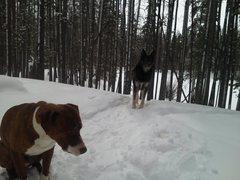 Rock Climbing Photo: dog skiing