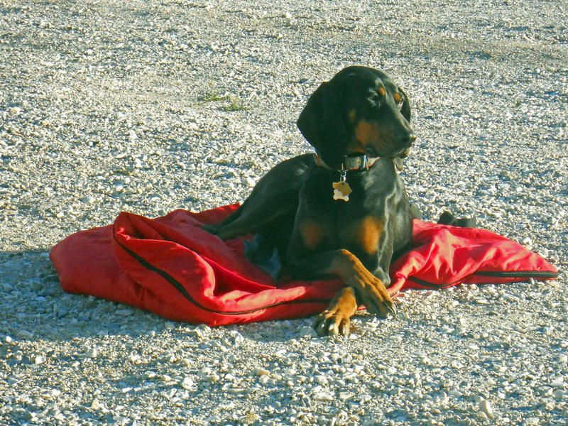 New Jack City crag dog (Sophie)