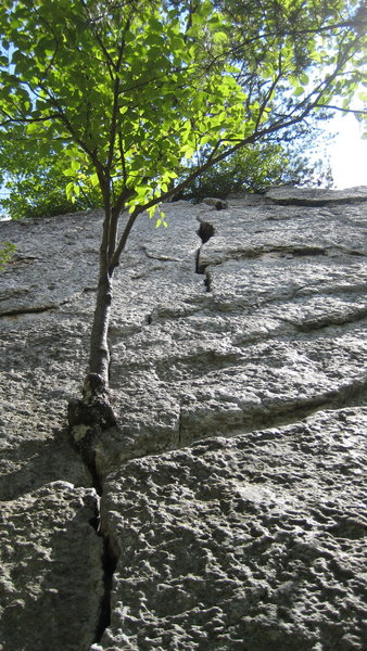 Rock Climbing Photo: View from the bottom.