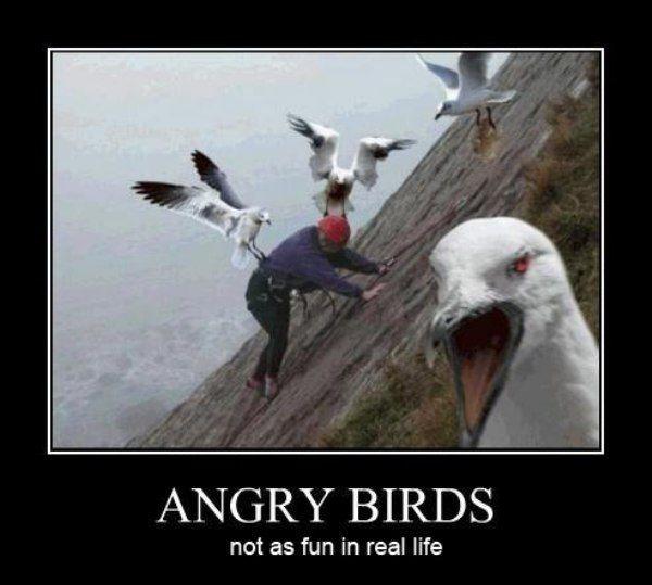 Rock Climbing Photo: Angry Birds