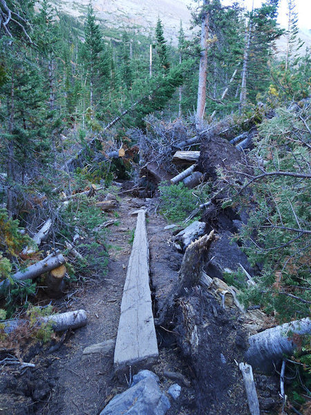 A big thanks to the trail crews who helped clear the trail from last winter's tree fall.