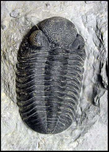 Rock Climbing Photo: From Trilobites to Lycra Tights