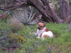 Rock Climbing Photo: Dog 1