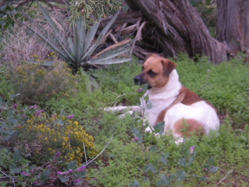 Rock Climbing Photo: Dog 2