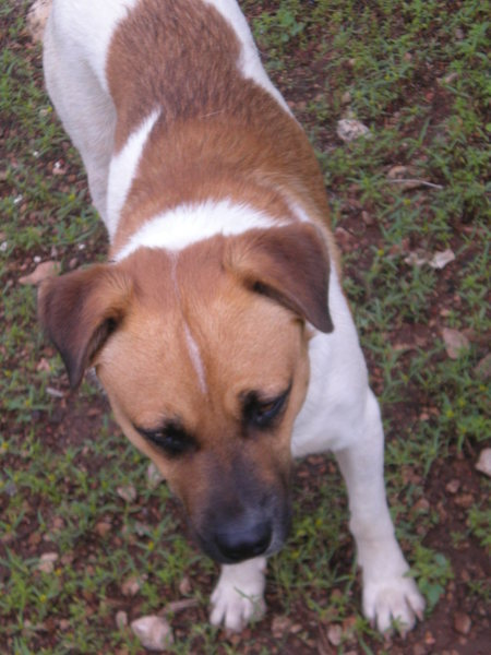 Rock Climbing Photo: Dog 4