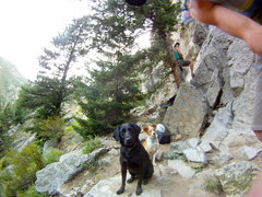 Rock Climbing Photo: my dog mesa (the lab), and her friend layla