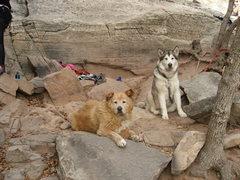 Rock Climbing Photo: X-Rock Dogs