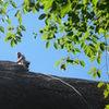 Nick nearing the top