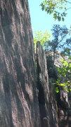Rock Climbing Photo: It's Alive!